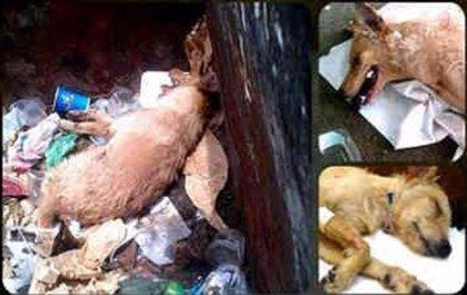 Condenado por matar a golpes a un perro y tirarlo a un contenedor