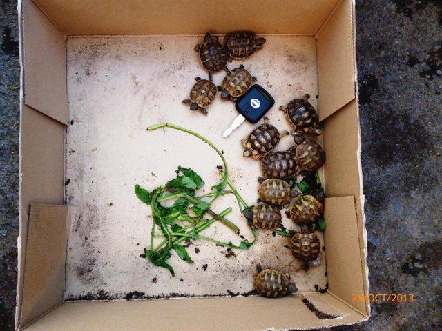 Tortugas intervenidas en peligro de exitinción