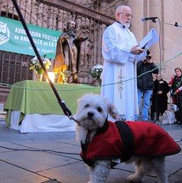 Misa De San Antón Bendecir Animales Perro