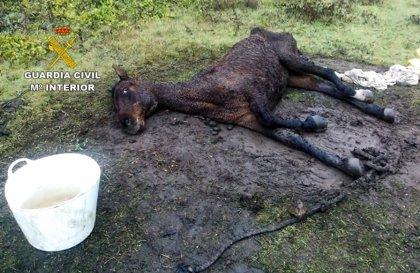 Imputado por maltratar a un caballo de su propiedad
