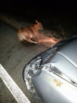 Vaca atropellada