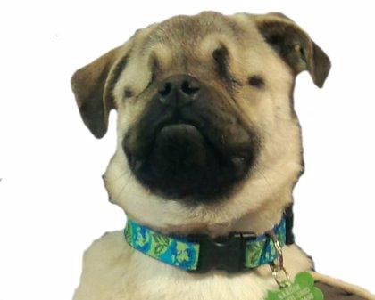 Xander, el perro ciego que se ha convertido en una mascota terapéutica