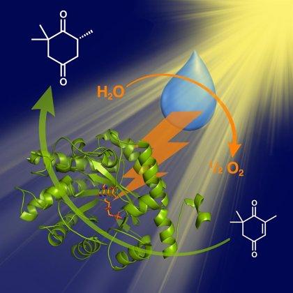 Investigadores logran un sistema catalítico para usar en los procesos de preparación de moléculas en fármacos