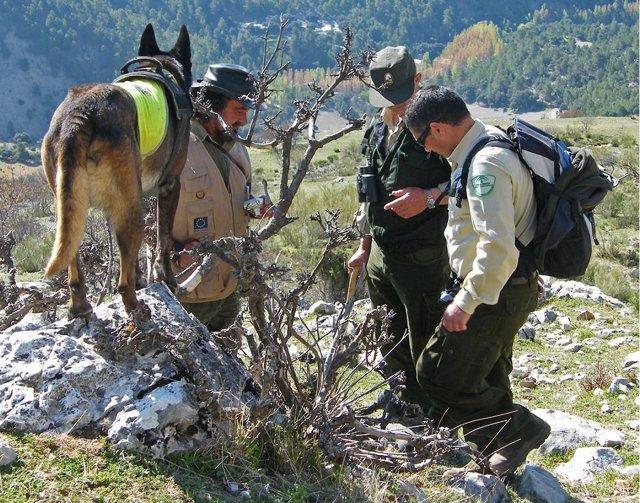 Agentes de Medio Ambiente y de la Unidad Canina buscan cebos envenenados