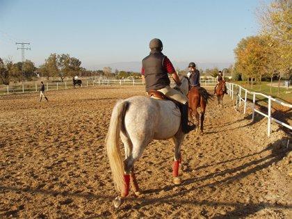 Un curso enseñará a cuidar y entrenar a caballos de carreras