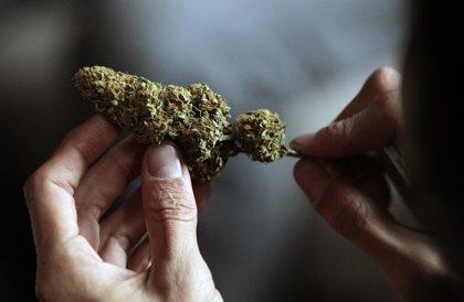 Presentan una iniciativa en el Senado para regular la marihuana