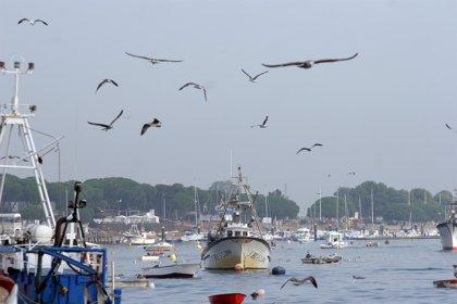 Pesca.- La flota pesquera gallega recupera la normalidad tras varias semanas de amarres por los temporales