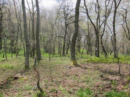 118 empresas participarán en la III Feria de la Biomasa Forestal de Catalunya en Vic