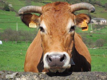 Oposición denuncia casos de tuberculosis bovina en 24 municipios