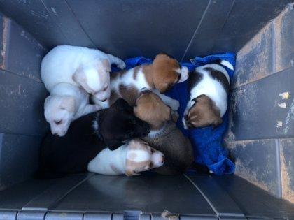 Intervienen trece perros en una vivienda del Casco Antiguo de Badajoz