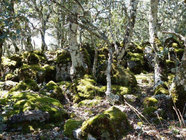 Musgo, monte, bosque