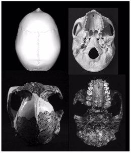 Fotogtrafía de varios cráneos