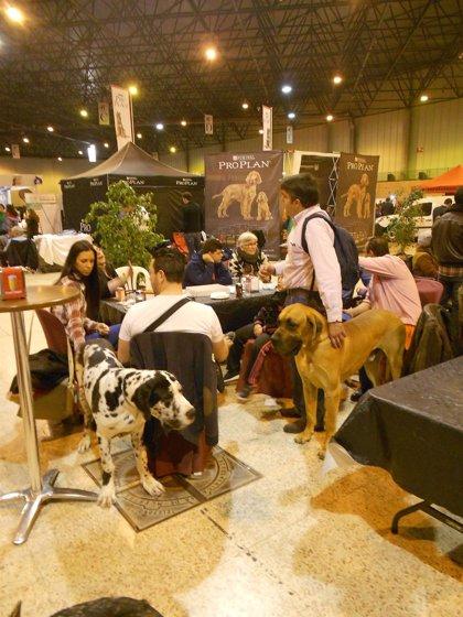 Fibes acoge la XX Exposición nacional y la XXXVIII internacional canina