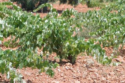 CANTABRIA.-El CIFA acogerá una conferencia sobre el cultivo de la vid en Cantabria