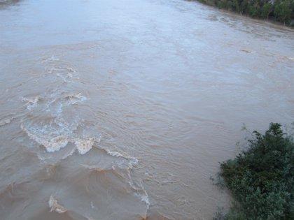 500 hectáreas de cultivos anegadas por el Ebro en Novillas