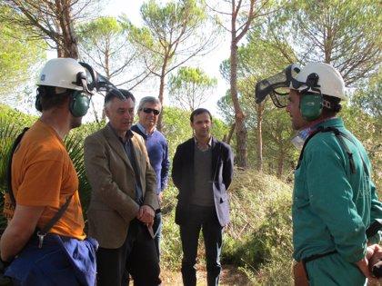 Junta genera más de 2.000 jornales de empleo en Sanlúcar y Rota con trabajos forestales y arreglo de caminos
