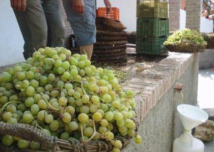 Dos másteres sobre viticultura en Ciudad Real y Albacete