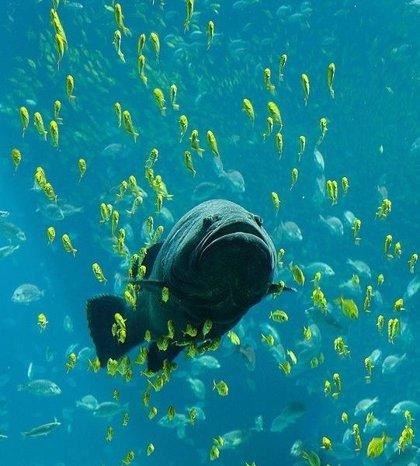 Los primeros animales introdujeron oxígeno en el océano