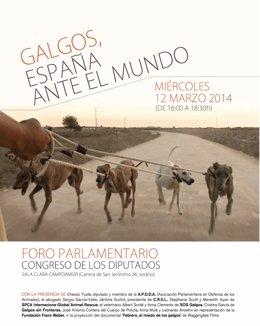 Jornadas sobre Galgos en España