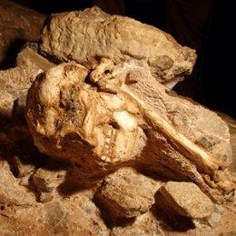 Austrolopitecus big foot