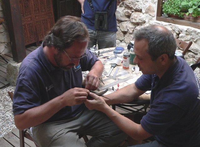 Técnicos de SEO/BirdLife marcan al vencejo 'Goyeneche'