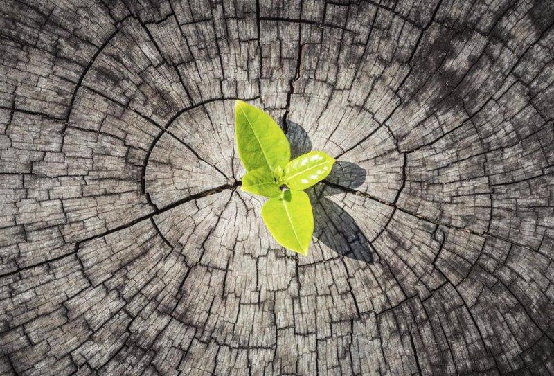 Resistir los embates de la vida, eso es resiliencia