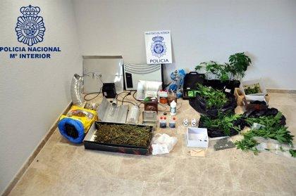 Detenidas por dedicarse al cultivo y venta de plantas de marihuana