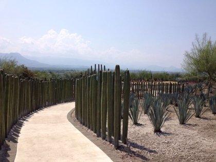 El jardín más grande del mundo abrirá sus puertas el próximo 21 de marzo en México