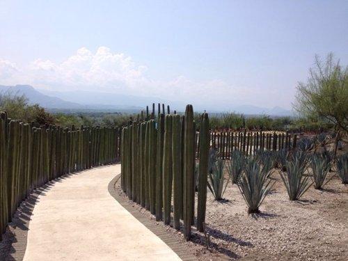 Jardines de México, Morelos