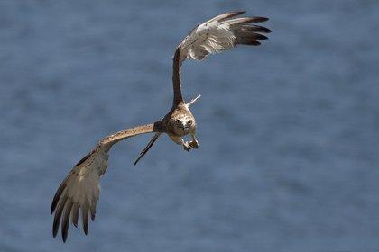 Ornitólogos procedentes de distintos países participarán en un festival sobre migraciones en Algeciras y Tarifa