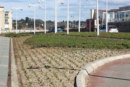 Ecologistas acusan al Ayuntamiento de sembrar una planta invasora en el Rinconín