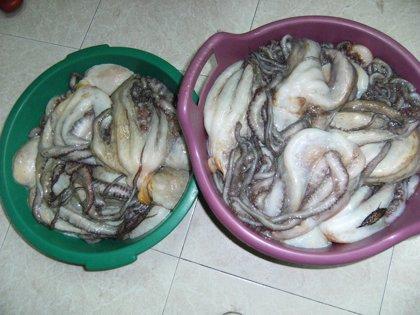Pesca.- Requisados casi 650 kilos de pescado y marisco y 179 aparejos en varios operativos contra el furtivismo