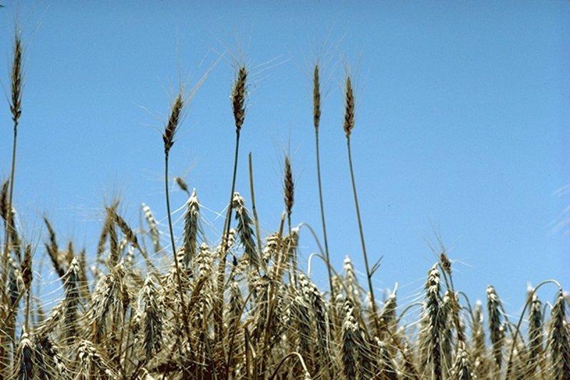 La calidad de los alimentos decae con el aumento del CO2