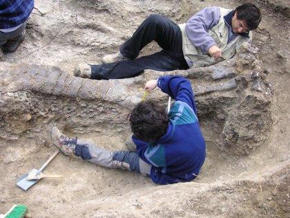 Fundación Conjunto Paleontológico de Teruel y Complutense abren un espacio de colaboración científica