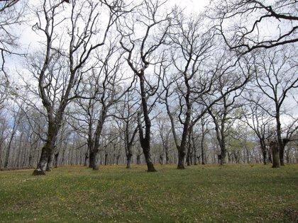 Los bosques sobre suelos fértiles secuestran cinco veces más carbono
