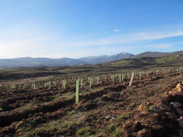 Plantación de Bosques Sostenibles