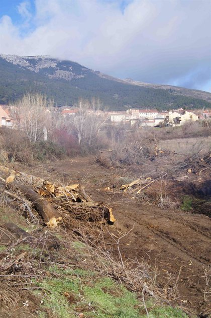 """Ecologistas amplían la denuncia en el SEPRONA por la """"destrucción"""" de un bosque de ribera"""