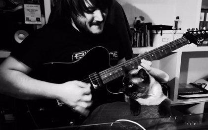 Al gato no le gusta que su dueño toque Metal