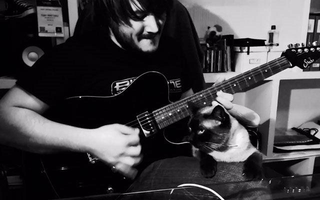 Guitarra eléctrica vs gato