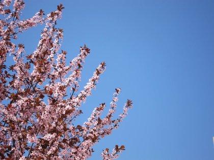 AMPL.- El 25% de los alérgicos en Tenerife lo son al polen