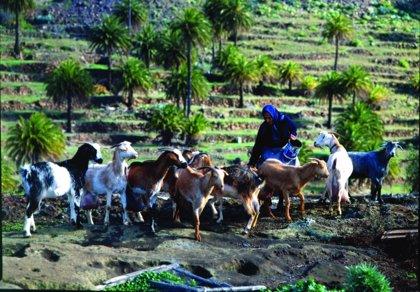 El Gobierno canario realiza más de 315.000 análisis de leche y quesos