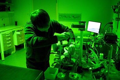 Primeros hallazgos sobre la función dual del CO2 en la fotosíntesis
