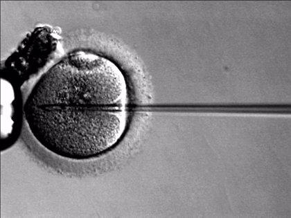 La Junta modifica la ley que regula la investigación con preembriones humanos