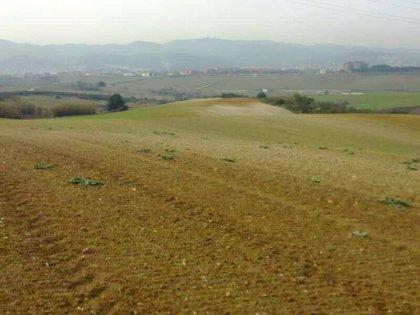 El Govern propone aumentar un 35% las subvenciones de seguros agrícolas