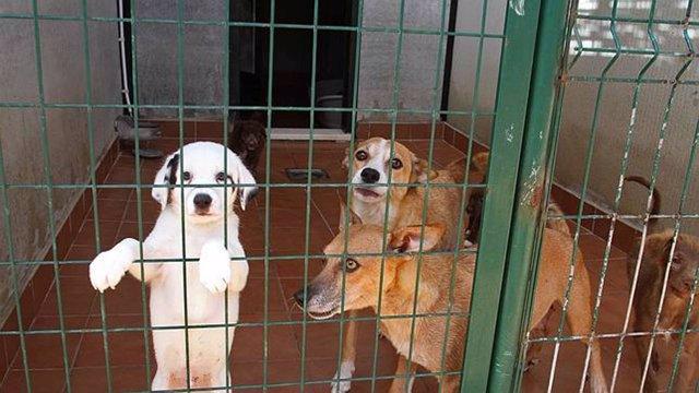 Perros de la residencia canina de la Diputación, en Alhaurín de la Torre