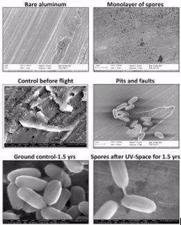 La NASA estudia organismos que pueden colonizar Marte