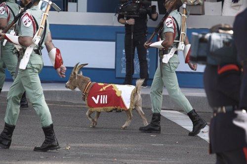 La cabra de la Legión en el Desfile del 12 de Octubre