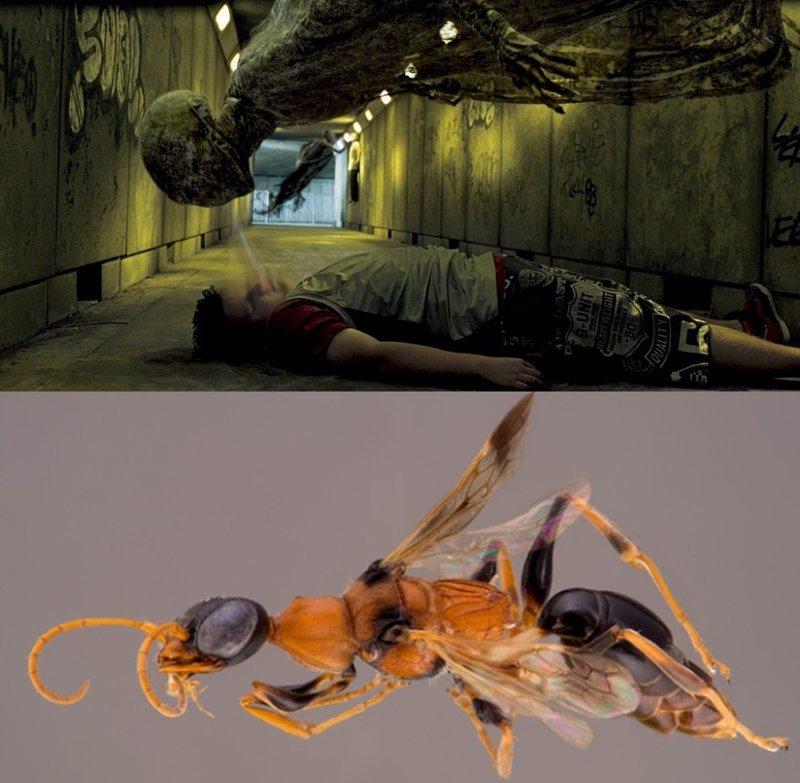 Harry Potter inspira el nombre de una nueva especie de avispa