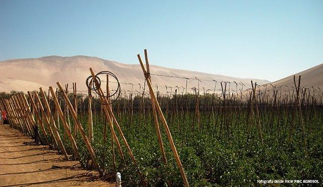 Región agrícola chilena