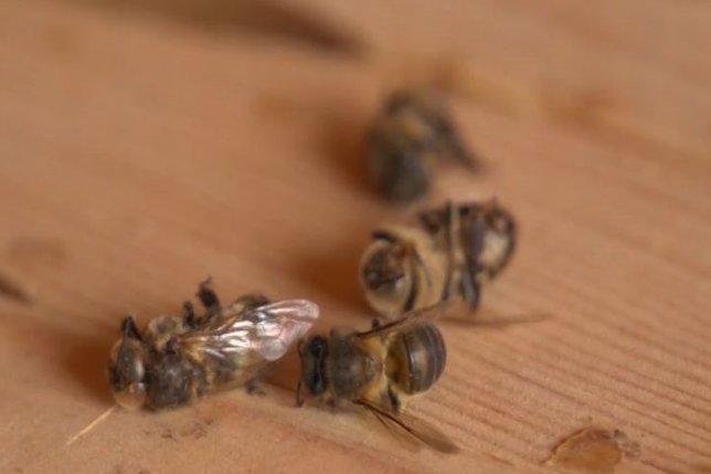La extinción de las abejas amenaza la agricultura